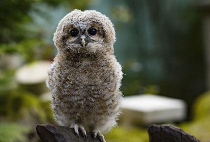 owl-2307405_1920.jpg
