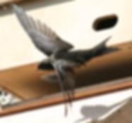 Swift-up-close.jpeg