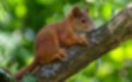 squirrel-4310069_edited.jpg