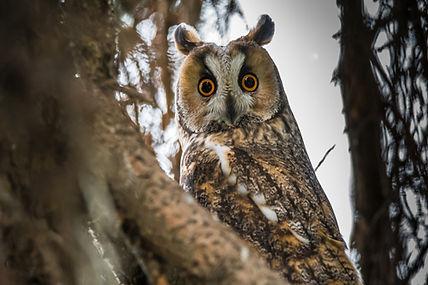 owl-3321411_1920.jpg