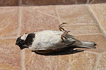 sparrow-87862_1920.jpg