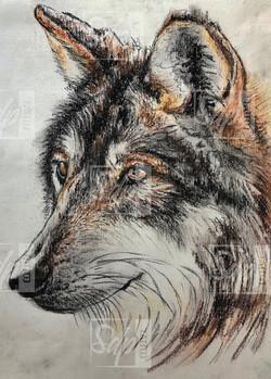 SDP Tattoo - Projet loup -