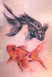 SDP Tattoo - Tattoo poissons-.jpg