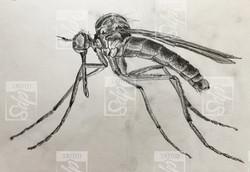 SDP Tattoo - Projet moustique -