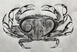 SDP Tattoo - Projet cancer tribal -