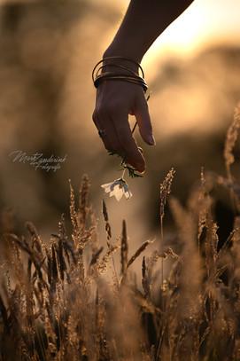 A flower in the field