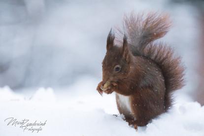 Winter squirl
