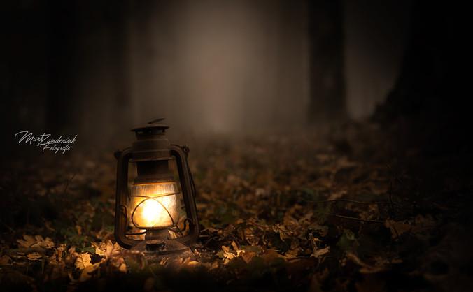 Light in the dark mysty forest