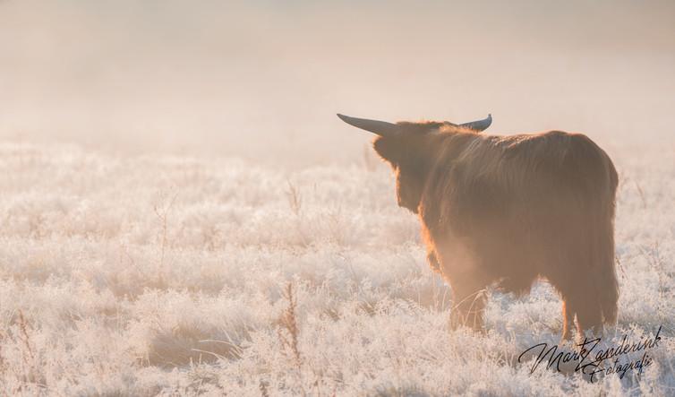 Gooood moooorning cow