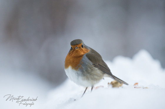 Robin looking a me