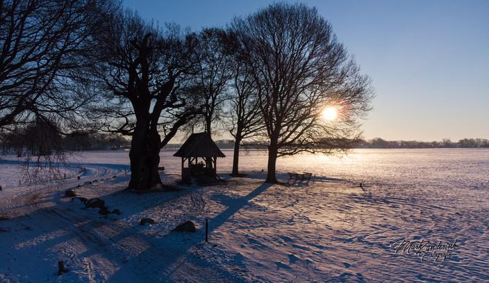 De kroezeboom in de sneeuw