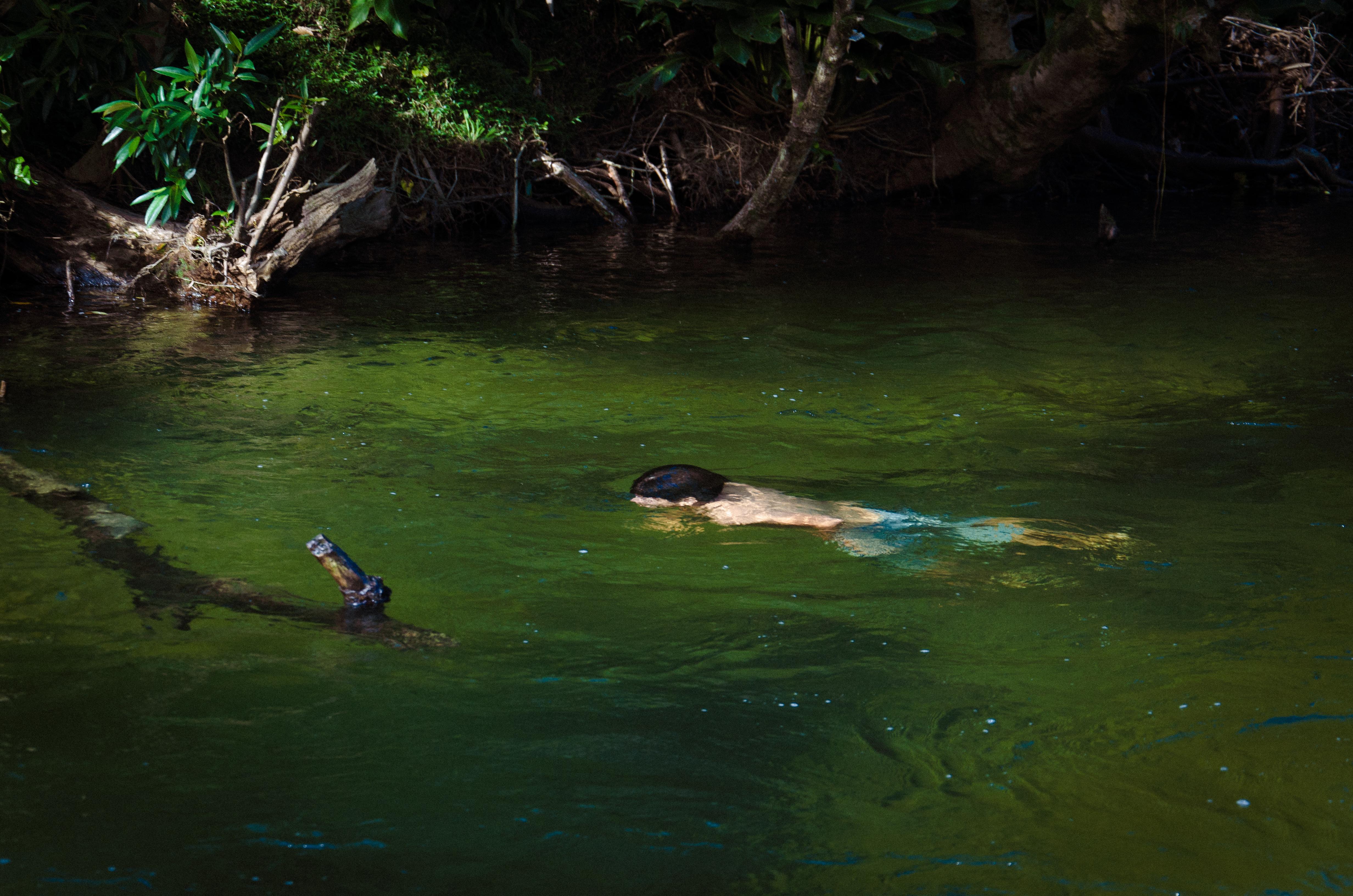 Curumim nadando no rio