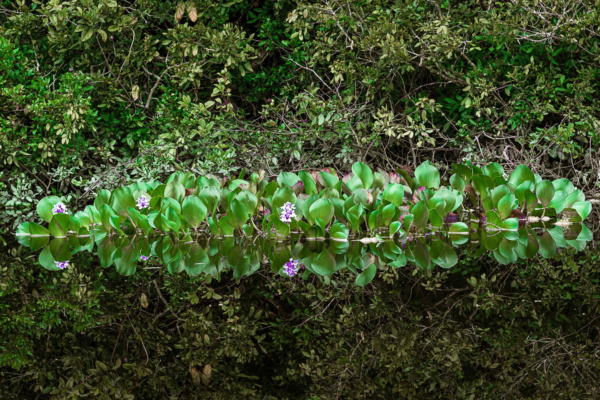 Rio Roncador - Pantanal dos Marimbus - BA