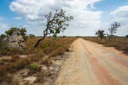 Macuxi - Raposa Serra do Sol