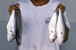 Peixeiro no Mercado Municipal de Mocajuba
