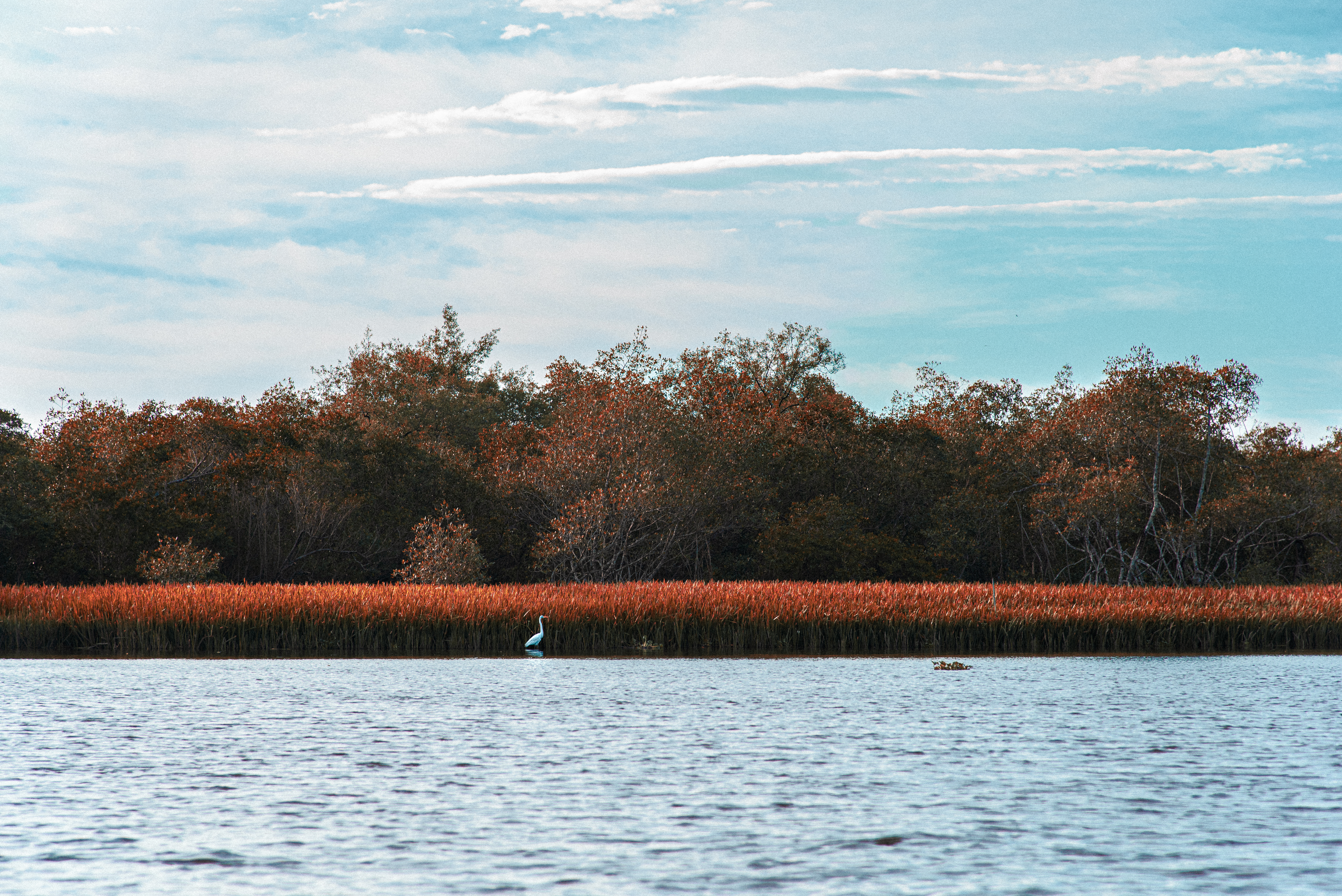 Garça branca na margem do rio, na paleta de Magritte