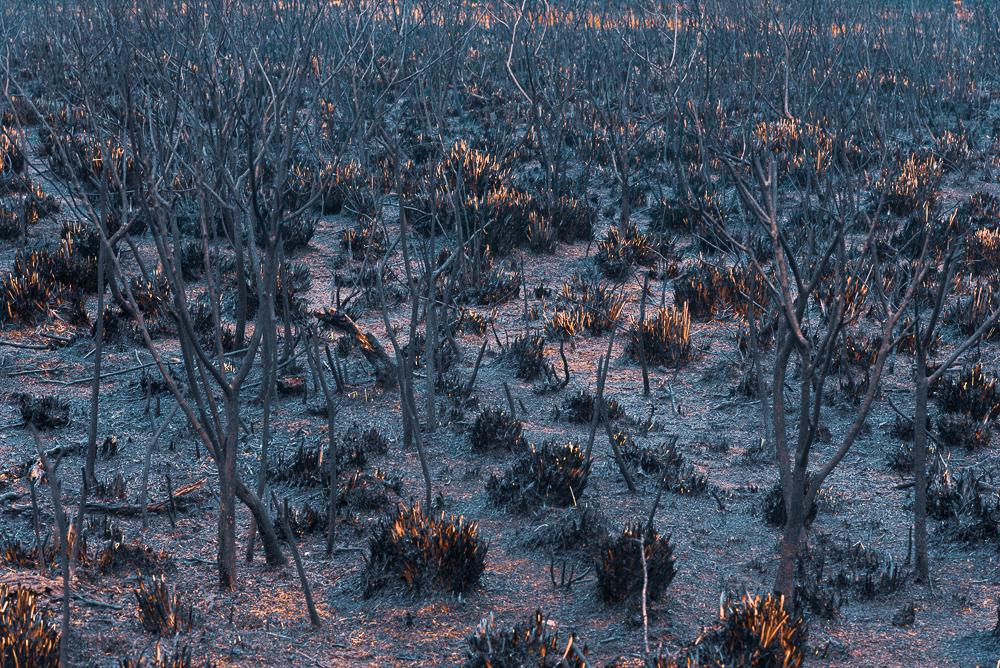 Queimada no Parque Nacional dos Aparados da Serra