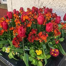 tulipps (8 of 10).jpg