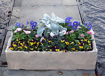 bedding plants  .jpg