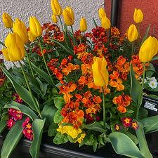 tulipps (9 of 10).jpg