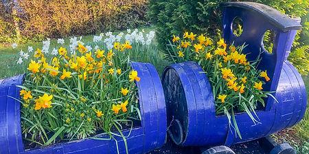 tulips_4a (1 of 2).jpg