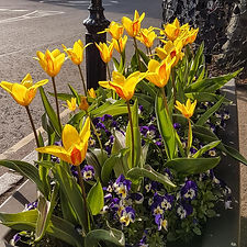 tulips_3 (4 of 6).jpg
