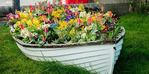 tulips (13 of 27).jpg