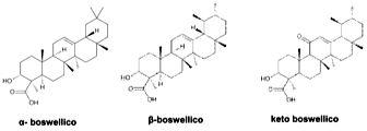 boswellia1.jpg