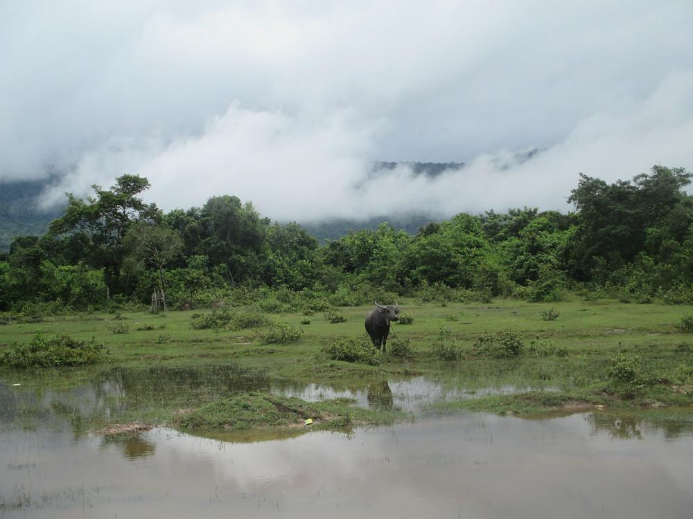 Für mich typisch Kambodscha: Wasserbüffel vor einer spektakulären Landschaft