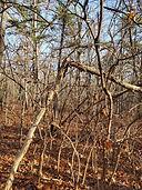 tree break2 pm.jpg