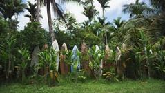 CNT HAWAII