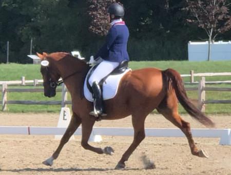Dancing on Horseback