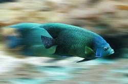 fish-582695__340