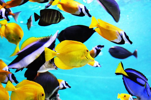 tropical-fish-2395619__340