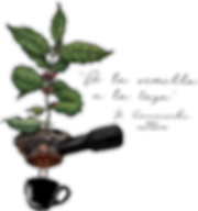plant to cup_2x.png