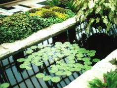 Conservatory Lilypads
