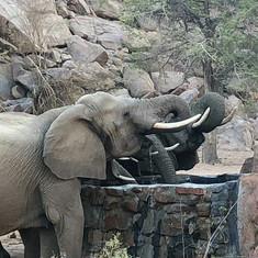 Elefantsäker vattenkälla