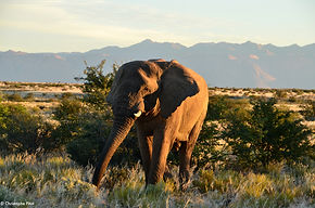 EHRA_Elephants_1.JPG