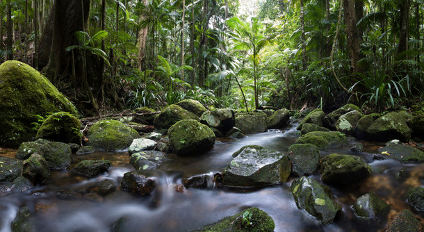 djungel.jpg