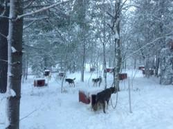 Dog yard....