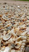 Visit Dundee Beach