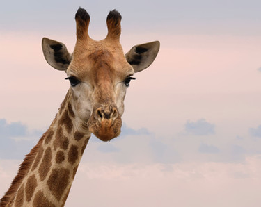 animal-animal-photography-close-up-80211