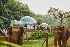 Anantara_Golden_Triangle_Elephant_Camp_A
