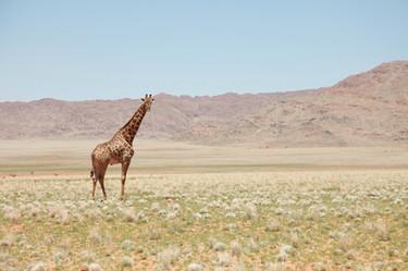 africa-arid-bushes-259411.jpg
