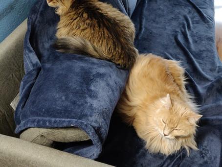 Happy International Cat Day! ¡Feliz día internacional del gato!