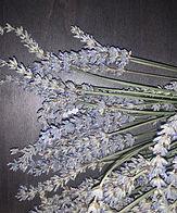 dried lavender stocks.jpeg