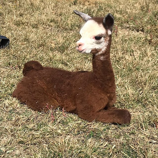 Baby season has started at TMMA Farms!.j