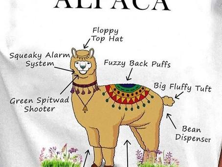 Raising Alpacas: The Basics