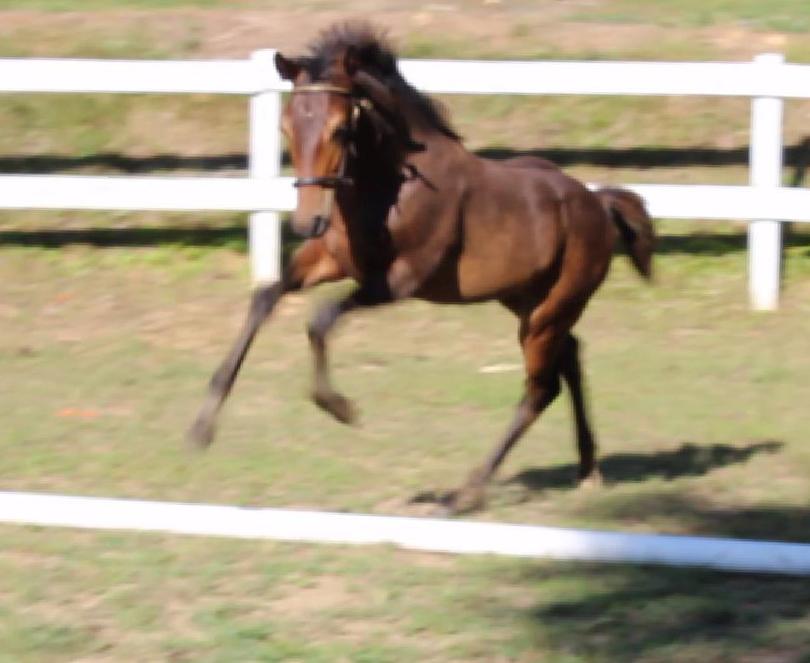 Express Jump