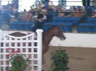 _Cabaret_ USEF Pony Medal Finals 2010.mp4